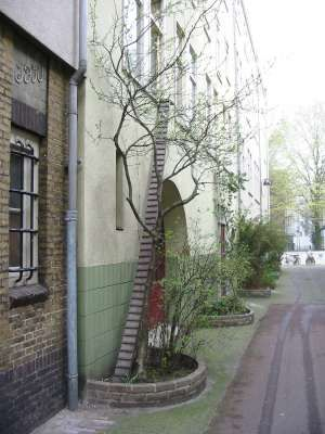 cat ladder in amsterdam