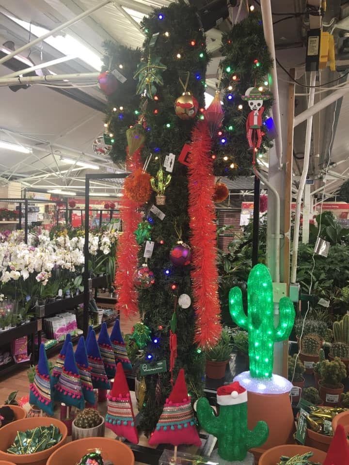 November 2019 Christmas Cactus Instead Of The Christmas Tree Here