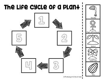 The Life Cycle of an Plant Sequence in 2020 (With images