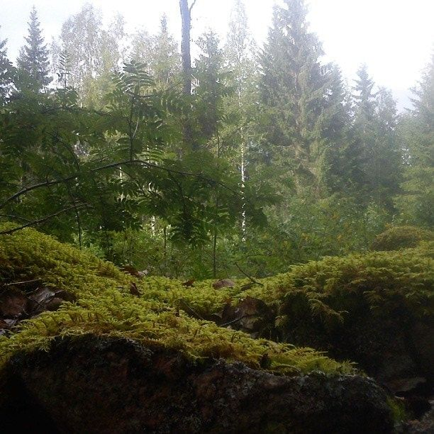 Sweforest - null