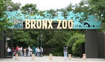Bronx Zoo: Super Discounts & Tips From A NYC Resident