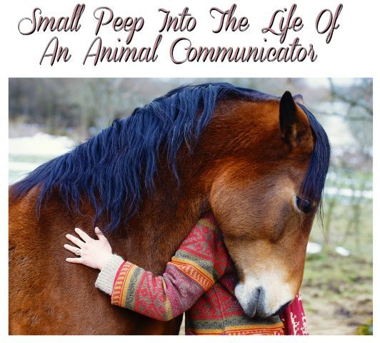 Small Peep Into The Life Of An Animal Communicator –  Faye's Week