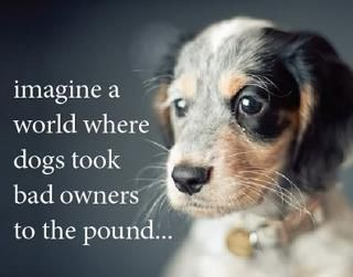 :): Sayings, Animals, Friends, Dogs And Cats, Stuff, Animal Quotes, Pets, Furbabies