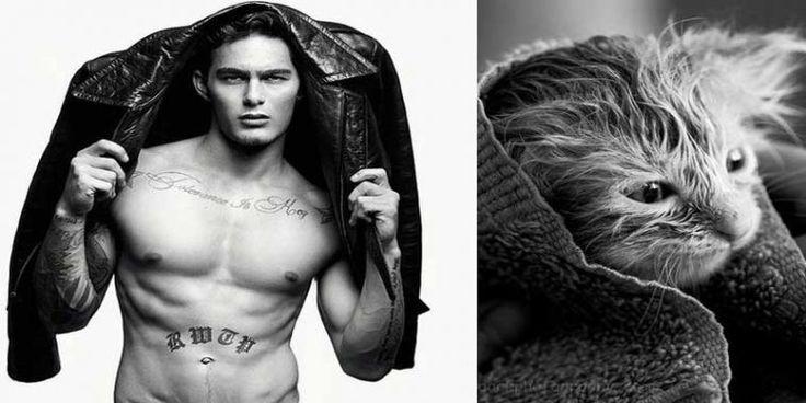 Fransız blogu Des Hommes et des Chatons'un başlattığı akımla seksi erkek fotoğrafları benzer pozları veren tatlı kedi fotoğraflarıyla birleştirildi. Galeri ajanimo.com'da.. #ajanimo #ajanbrian #hayvan #animal #kedi #erkek #man #cat