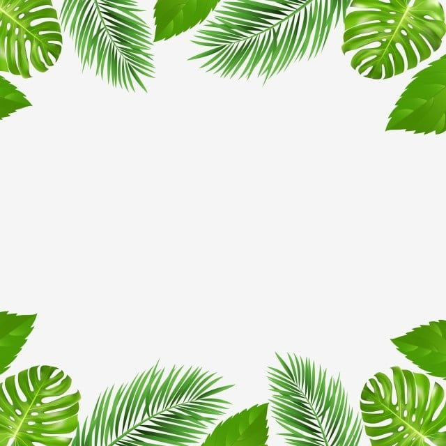 Frontera Tropical De Palmeras De Verano Y Imagenes Predisenadas De La Naturaleza Tropical Frontera Png Y Vector Para Descargar Gratis Pngtree Tropical Frames Tropical Background Flower Background Wallpaper