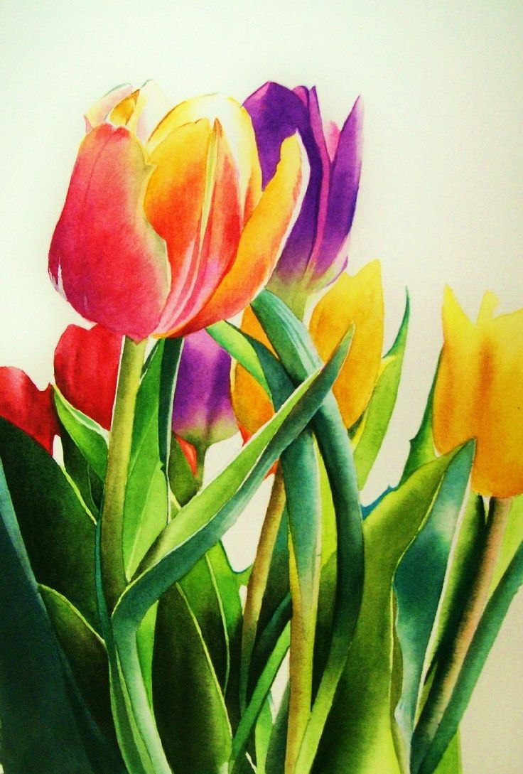 Fine watercolor art for sale -  Spring Tulips Original Fine Art For Sale Jacqueline Gnott