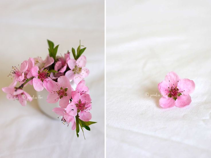 #pink #roz #cherryblossom