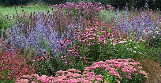 Pin On Flowering Perennials