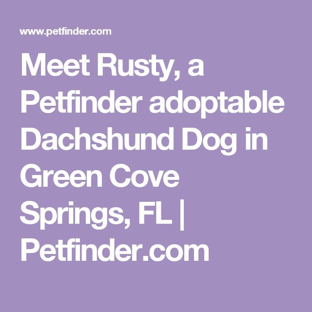 Meet Rusty, a Petfinder adoptable Dachshund Dog in Green Cove Springs, FL | Petfinder.com