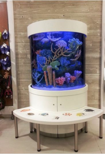 1000 images about living color aquariums retail for Fish and more pet store