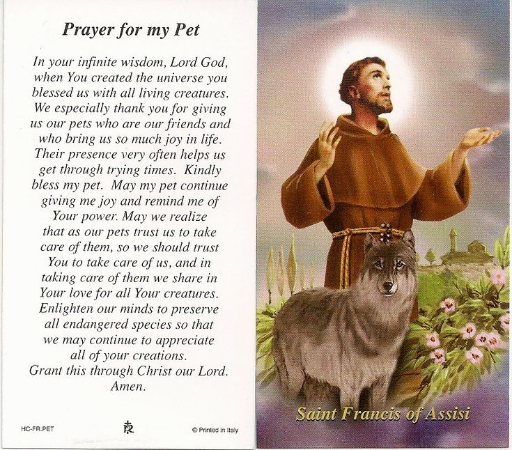 saint francis of assisi prayer | Prayers to St Francis of Assisi to help our pets - The Mystical Side ...