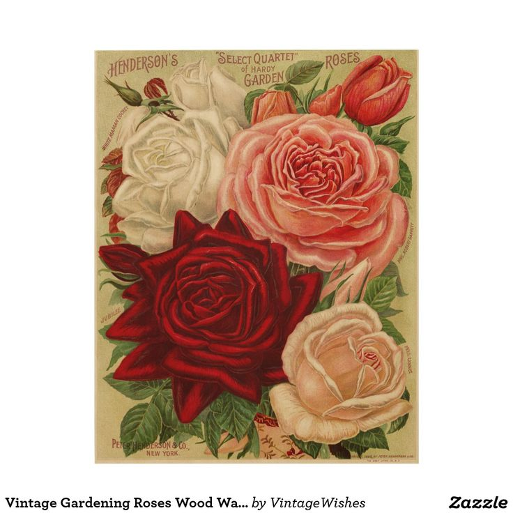 Vintage Gardening Roses Wood Wall Art - #vintagewishes #windywinters #zazzle