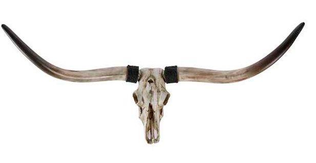 Schedel Horns Wide