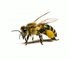Bees Are  Powerful Creatures!