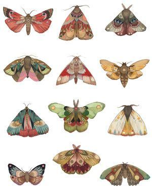 Collector: Moth Series (Special Size) 11″x14″ – #1…