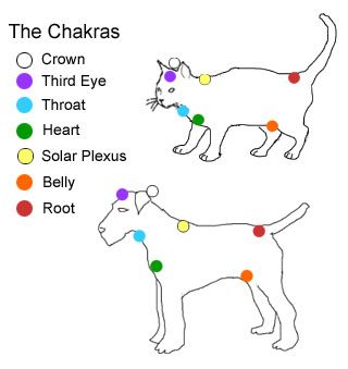 "Dog and Cat ""Chakras"" for Reiki energy therapy"