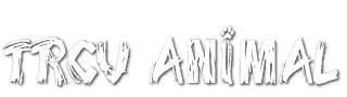 TRCV Animal | Tonte et toilettage d'animaux | Services | Gatineau