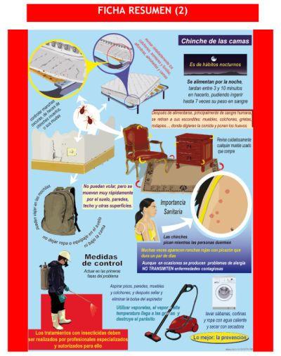 Estudi Verd, S. L.  Control de Plagas en Valencia - Eliminar chinches de cama en Valencia.