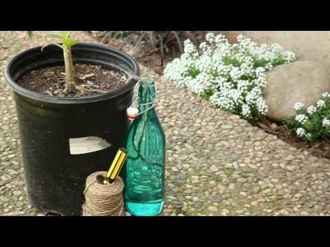 Automatic Plant Watering System | How to Water Plants While On Vacation