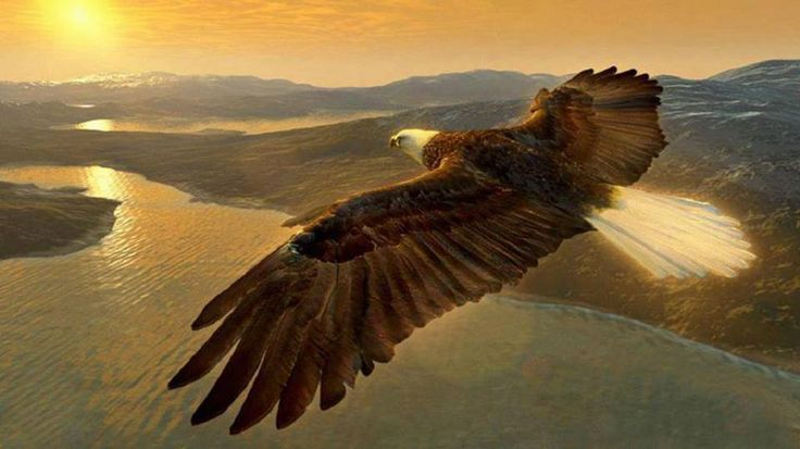 Image result for EAGLE SOARING