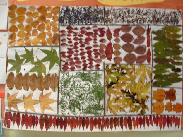 Collage-di-foglie