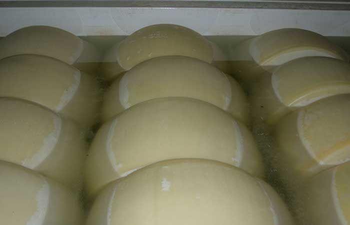 DOMCA le ofrece productos para el control microbiológico de la slamuera de quesería. El buen estado microbiológico de la salmuera de quesería es fundamental en este tipo de industrias, ya que un elevada presencia de microorganismos en este medio puede hacer que levaduras y bacterias (como Staphylococcus, Brevibacterium, Pseudomonas,) crezcan y se incorporen a la corteza del queso, generando fenómenos negativos tales como proteólisis de la misma, aparición de manchas coloreadas o de malos…