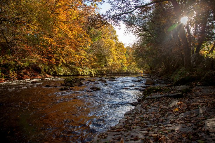 Autumn day on the River Dart