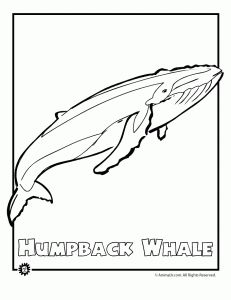 52 best images about science endangered animals on pinterest for Endangered species coloring pages