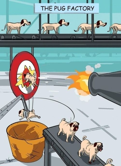 poor pug puppies