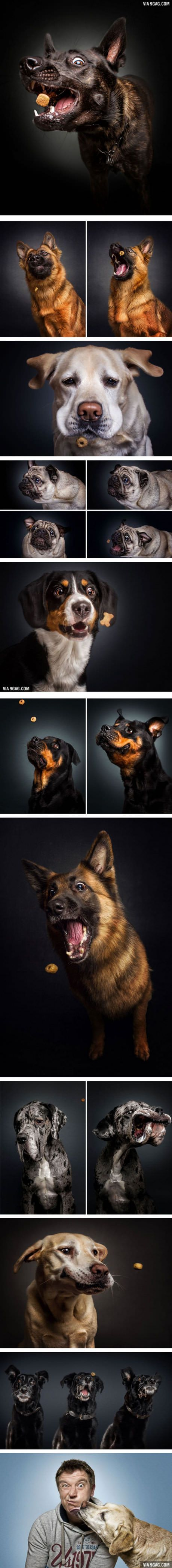 Photographer Captures Hungry Dogs' Funny Faces When They Catch Treats (By Christian Vieler) #FunnyDog