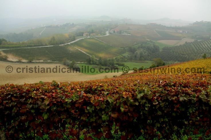 #autumn in Langhe a view from bricco Appiani monforte d'alba #photo #wine