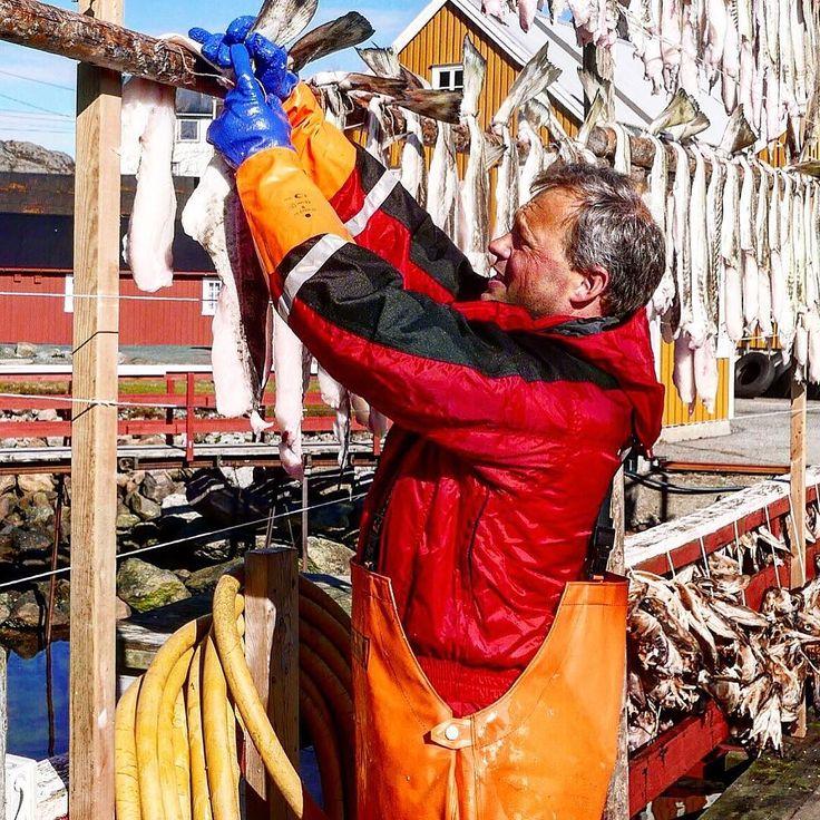 Hanging & Drying #nusfjord #lofoten #nusfjordfisk #nusfjordrorbuer #vestfjorden #nordnorge #norway #classicnorway #rorbu lofotenislands by nusfjord2020