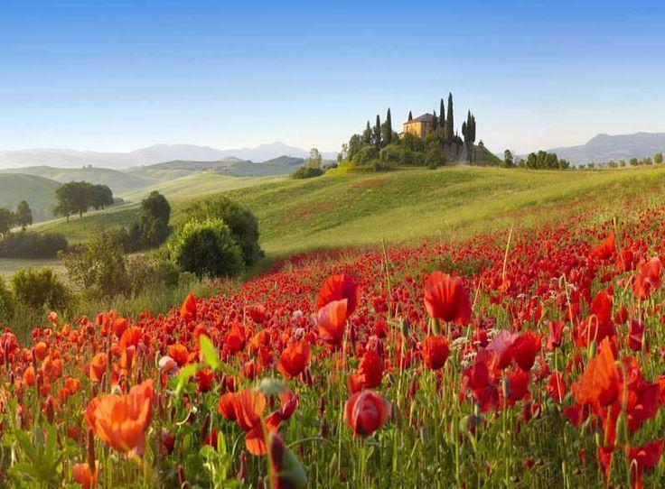 Green fields, poppies...