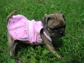 Cost to Ship - Beautiful Bugg Puppy needs to get home - from ...