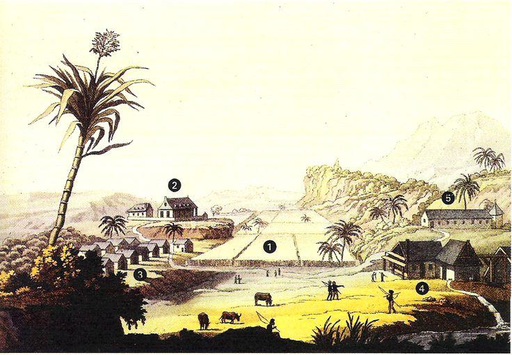 Un modèle de plantation sucrière aux Antilles