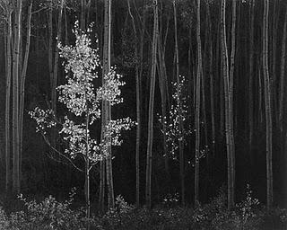 Ansel Adams. My fav photographer!