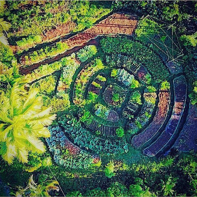 Pin On My Garden