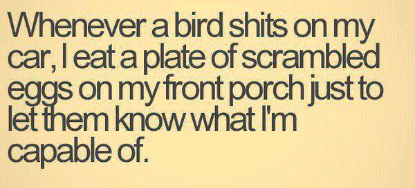 Birds. Bottom of the food chain. lol