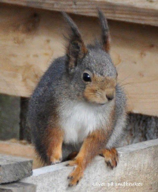 I hagen får vi besøk av både ekorn og småfugler.