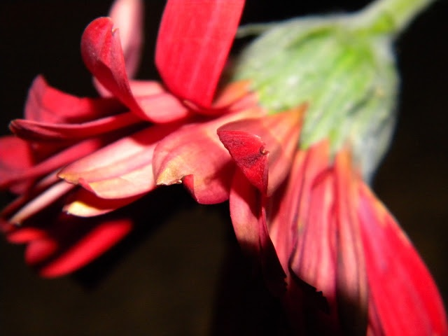Things you didn't know your point and shoot could do: Shallow depth of field