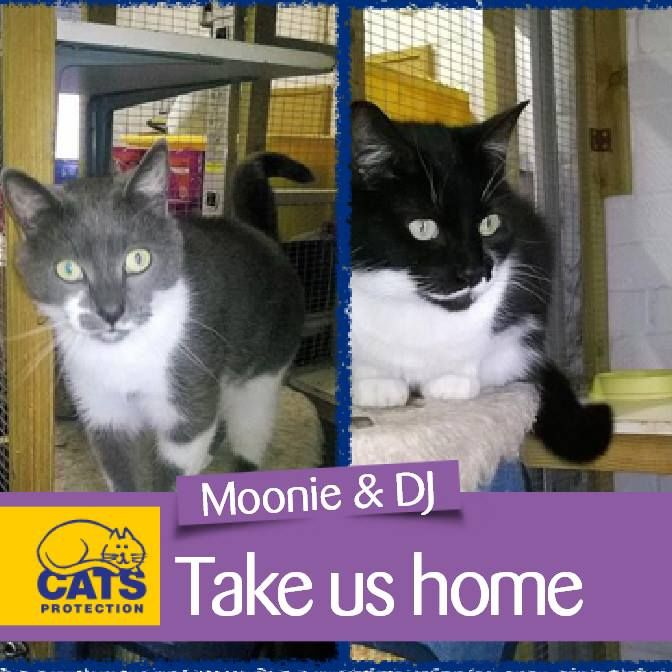 Meet our Cats of the Month for October   Moonie & DJ are mother and son. Moonie is an 8-year-old short haired female. And DJ is a grey & white short haired male. They have always been together and want to stay together in a home where they can settle down into a quiet calm home and enjoy a peaceful life.   Moonie & DJ are both friendly cats enjoying a fuss although Moonie will take a little time to learn to trust someone new. Moonie is not too bothered about going outside but DJ enjoys going…