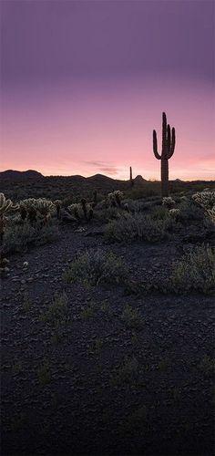 Desert Sunset Cactus Landscape Printed Photography Backdrop – 4634