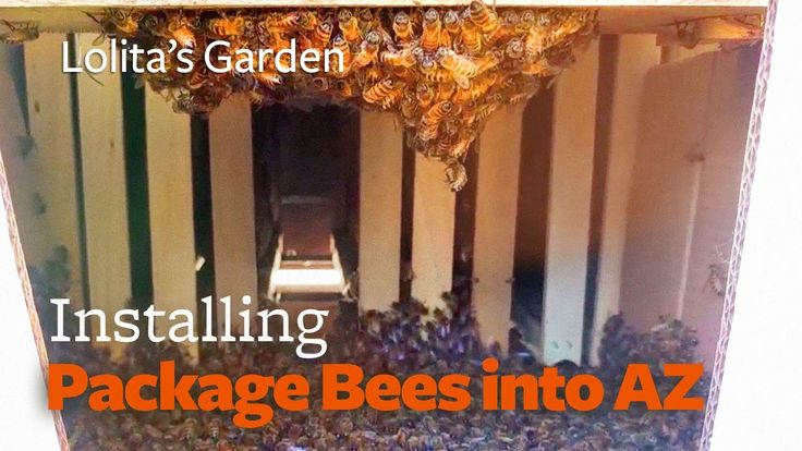 AZ Hive | Package Bee Installation