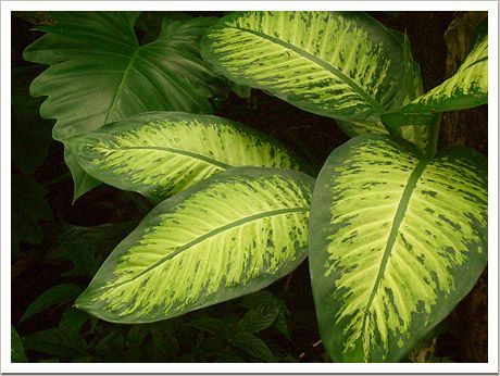Gallery For > Rainforest Pictures Of Plants | Flowers ...