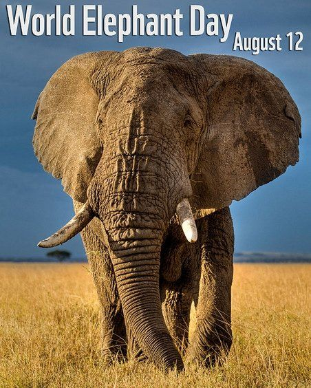 Image result for picmix elephant day