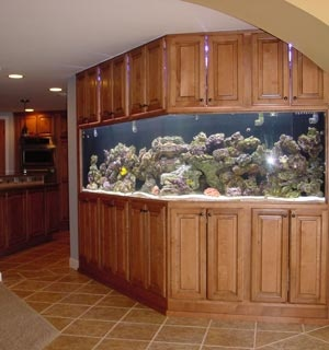 47 best images about aquariums on pinterest big fish for Fish tank house