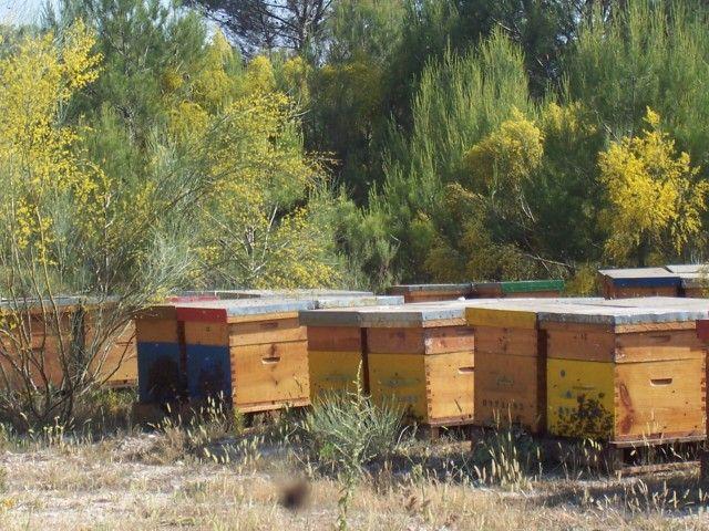 La Generalitat convoca ayudas por 1,4 millones para mejorar la producción y comercialización de miel