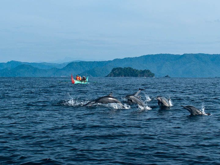 See the dancing dolphins at Kiluan Bay, Lampung, Indonesia|http://www.nusatrip.com/en/flights/to/bandar_lampung_TKG #destination #lampung #Indonesia #nusatrip #travel #holiday #travelingideas #onlinetravelagency
