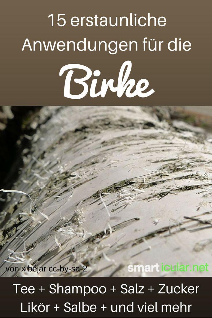 Die Knospen und Blätter der Birke sprießen früh sie können verblüffend vielseitig und nützlich verwendet werden. Diese Anwendungen sind einfach genial.:
