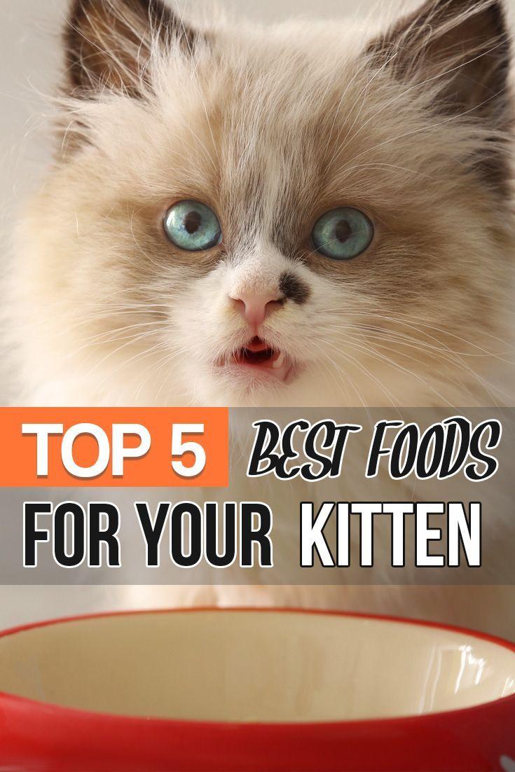 What Are The Best Kitten Foods Kitten Food Brands Kitten Food